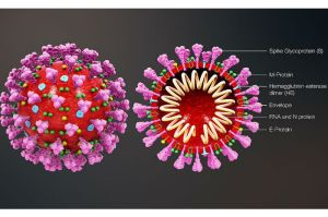 coronavirus_structure_large